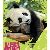 Koc dziecięcy Animal Planet – Panda, 120 x 150 cm