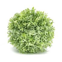 Kula Tymianek zielony, śr. 28 cm