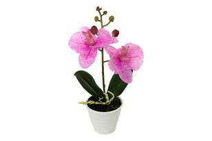 Orchidea kerámia virágcserépbe, világos rózsaszín