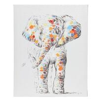 Obraz Colours Elephant, 40 x 50 cm