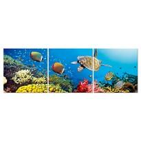 Obraz Podwodny świat
