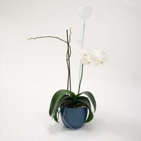 Tyčka k orchideji srdce, sklo, 2 ks