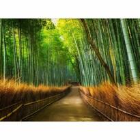 Fototapeta Bamboo, 232 x 315 cm