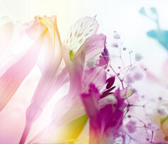 Fototapeta Květ 270 x 360 cm
