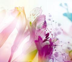 Fototapeta Kwiat 270 x 360 cm
