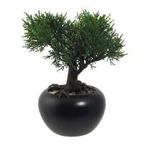 Sztuczne bonsai Cedr w doniczce zielony, 19 cm