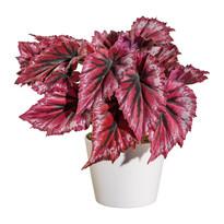 Sztuczna begonia w doniczce czerwony, 25 cm