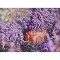 Tablou pe pânză Orléans Lavender, 78 x 58,5 cm