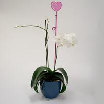 Tyčka k orchideji srdce, priesvitná fialová, 2 ks