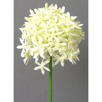 Umelá kvetina Cesnak krémová, 64 cm