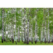 Fototapeta XXL Březový háj 360 x 270 cm, 4 díly
