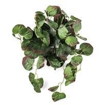 Műnövény begónia