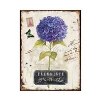 Obraz na plátně Rozkvetlá hortenzie