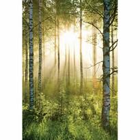 Fototapeta Forest, 158 x 232 cm