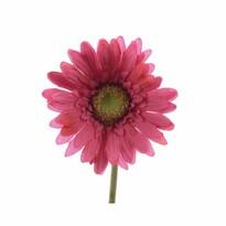 Sztuczny kwiat gerbery ciemnoróżowy, 50 cm
