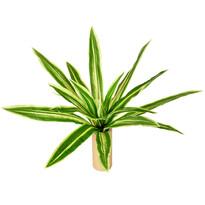 Floare artificială Neoregelia, diam. 60 cm