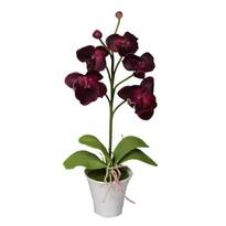 Mű orchidea virágtartóban, sötétpiros, 35 cm