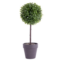 Buxusový stromček v kvetináči čierna