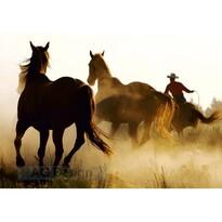 Fototapeta Konie, 270 x 360 cm