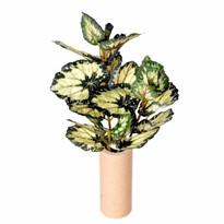 Sztuczny kwiat begonii zielono - żółta