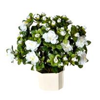 Umělá květina Azalka bílá, 35 cm