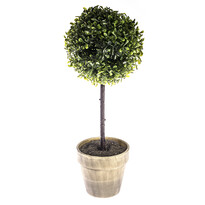 Buxusový stromček v kvetináči sivá