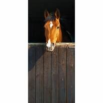 Fototapeta Horse, 210 x 95 cm