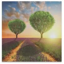 Obraz na plátne Sunset
