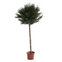 Umělý strom cypřiš japonský kulový 140 cm