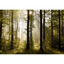 Fototapeta XXL Raný les 360 x 270 cm, 4 diely