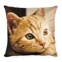 Obliečka na vankúšik Mačiatko, 45 x 45 cm