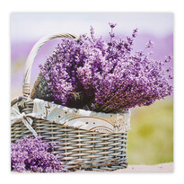Obraz na plátně Saintes Lavender 58 x 58 cm