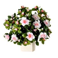 Művirág Havasszépe vil. rózsaszín, 35 cm