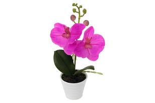 Orchidea v keramickom kvetináči, tm. ružová