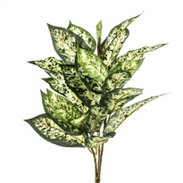 Művirág buzogány zöld-sárga