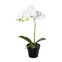 Umelá Orchidea v kvetináči biela, 37 cm