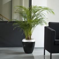 Samozavlažovací kvetináč Calimera, biela + čierna