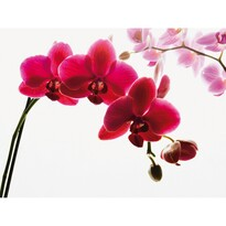 Fototapeta orchidej 315 x 232 cm