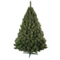 Vánoční stromek Borovice, 160 cm