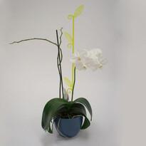 Pręcik do storczyków liść, przeźroczysta zieleń, 2