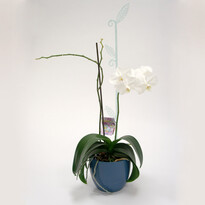 Tyčka k orchideji list, sklo, 2 ks