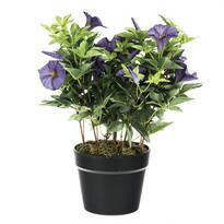 Zorele artificiale violet, 54 cm