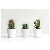 Vászonkép Kaktuszok Texas, 60 x 40 cm