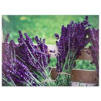 Obraz na płótnie Lyon Lavender, 78 x 58,5 cm