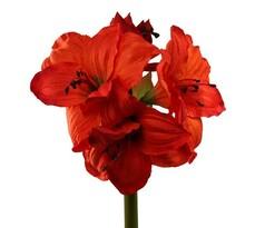 Umělá květina Amarilis oranžová